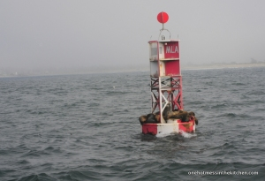 Sea-Lions drying off a bit