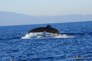 One of 4-5 Humpback Whales we saw that day.