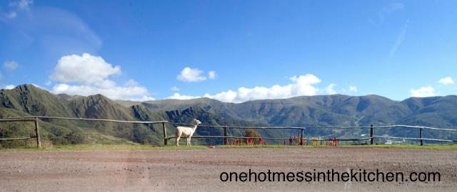 wandering llama!