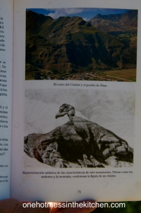 Book showing the Condor on the hillside