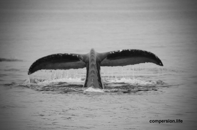 Elderwhale